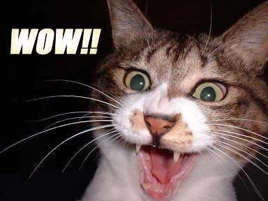 cat-wow